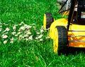 Easy-organic-lawn-care_330x260